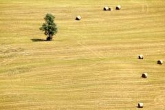 Abruzzo cuntrysideter Fotografering för Bildbyråer