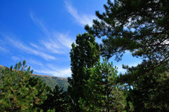 Abruzzo Park Royalty Free Stock Photography