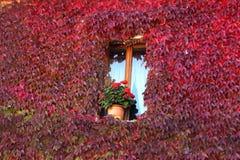 Abruzzo. Red window in Tagiacozzo centre Stock Photos