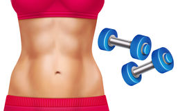 Abs Woman Realistic Set. Beautiful woman abs and two dumbbells realistic set isolated on white background vector illustration Royalty Free Stock Photos