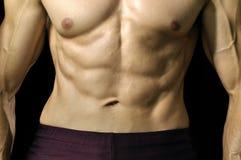 ABS y torso musculares Imágenes de archivo libres de regalías