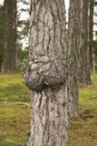Abschürfung auf Kabel des Baums Lizenzfreies Stockfoto