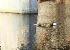 Abschied zum Winter- und Frühlingsbegrüßen - Ertrinken von Morana stockbild