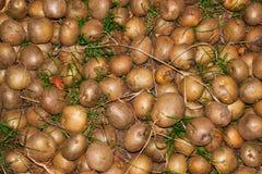 Abschluss der rohen Kartoffel oben Stockfotografie
