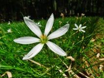 Abschluss der weißen Blume oben Stockbild