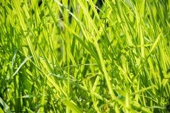 Abschluss des grünen Grases Makrooben Lizenzfreie Stockfotos