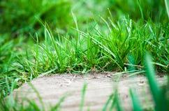 Abschluss des grünen Grases oben Feld des grünen Grases gegen einen blauen Himmel mit wispy weißen Wolken Lizenzfreie Stockfotos