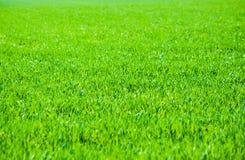 Abschluss des grünen Grases oben Feld des grünen Grases gegen einen blauen Himmel mit wispy weißen Wolken Lizenzfreies Stockbild