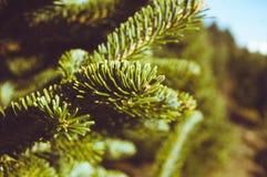 Abschluss des Weihnachtsbaums oben Lizenzfreies Stockbild
