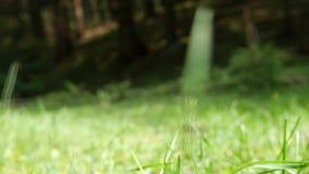 Abschluss herauf die Mannschritte, die auf das Holz auf einem Gebirgsweg durch die Natur gehen stock video footage