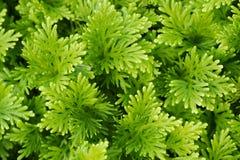 Abschluss herauf grünes Gras im ParkHintergrund stockfotos