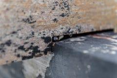 Abschluss herauf kleine Schnecken mit Oberteil, die sich schützen lizenzfreie stockfotografie