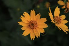 Abschluss herauf makro gelbe Blumen mit grünem Hintergrund stockbilder