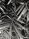 Abschluss herauf Muster des Bambusses verlässt im Dschungel oder im Garten in der Schwarzweiss-Art Lizenzfreie Stockfotografie