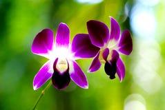 Abschluss herauf purpurrote Orchidee blühen am Tag, schließen herauf natürlichen Hintergrund der abstrakten Weichzeichnung lizenzfreie stockbilder