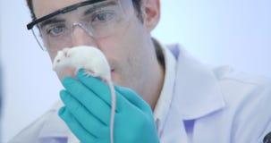 Abschluss herauf Schuss des Wissenschaftlers der medizinischen Forschung hält Labormaus im hellen und modernen Labor stock footage