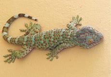 Abschluss herauf Tokay-Gecko ist auf der Wand stockfoto