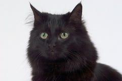 Abschluss oben der schwarzen Katze stockbild