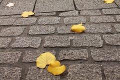 Abschluss oben des gelben toten Baums lässt das Lügen auf der Bodenstraße Stockbild