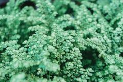 Abschluss- oben des grünen Grases und des Grasbodens und der -Rasenfläche Stockfoto