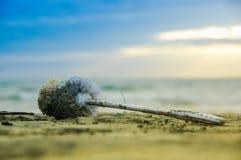 Abschluss oben des selektiven Fokus der Plastikbadezimmerbürste verlassen auf dem Strand Stockfoto
