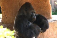Schließen Sie oben vom Gorilla, der traurig schaut Lizenzfreies Stockfoto