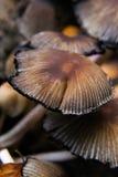 Abschluss oben eines Pilz-Feldes im Herbst Stockbild