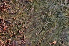 Abschluss oben, Makro, Draufsicht Alter Stumpf im Wald maserte Oberfläche eines alten Baums stockfotografie