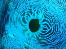 Abschluss oben/Makrobild von Riesenmuscheln auf Great Barrier Reef Ausralia lizenzfreie stockfotos