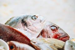 Abschluss oben von köstlichen frischen Fischen auf Eis auf Marktspeicher kaufen dorado Stockfoto