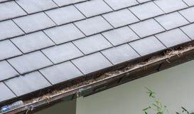 Abschnitt der Regengosse verstopft mit Bl?ttern, R?ckstand auf Wohnheim stockfotos