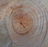 Abschnitt im Baum - clouseup lizenzfreies stockbild