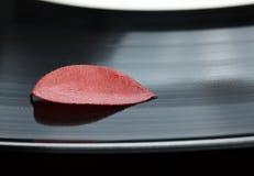 Abscissed blad på den svarta vinylplattan Fotografering för Bildbyråer