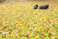 abscissed höstbakgrund blad yellow Arkivfoton