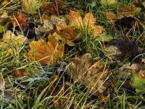 Abscissed sidor på gräset Arkivfoton