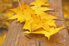 Abscissed yellow leaves Royalty Free Stock Photo