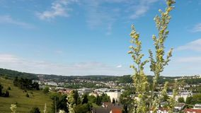 Absint örter i Tyskland stock video