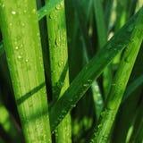 Absolut enormt gräs Arkivbilder