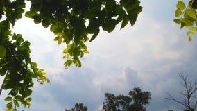 Absolute Park-Schönheits-Gesamtlänge für Natur-Liebhaber und Videohersteller stock footage