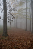 absolutna mgła Fotografia Royalty Free
