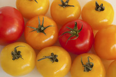 Absorbed Tomatoes Stock Images