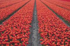 Absract blommor Arkivbilder