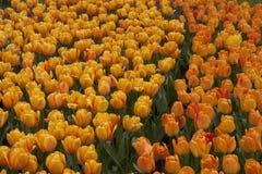 Absract blommor Royaltyfria Bilder