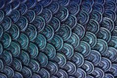 Abstact black blue scale texture background scale stock images