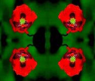Abstact blommakalejdoskop Royaltyfria Bilder
