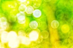 Abstact defocus bokeh光背景由森林样式制成 免版税库存图片