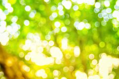 Abstact defocus bokeh light background made of forest style. Abstact defocus bokeh light background made of forest style,Beautiful background image Stock Image