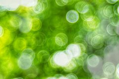 Abstact defocus bokeh light background made of forest style. Abstact defocus bokeh light background made of forest style,Beautiful background image Royalty Free Stock Images