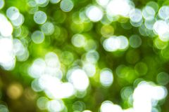 Abstact defocus bokeh light background made of forest style. Abstact defocus bokeh light background made of forest style,Beautiful background image Royalty Free Stock Image