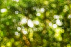 Abstact defocus bokeh light background made of forest style. Abstact defocus bokeh light background made of forest style,Beautiful background image Stock Photos